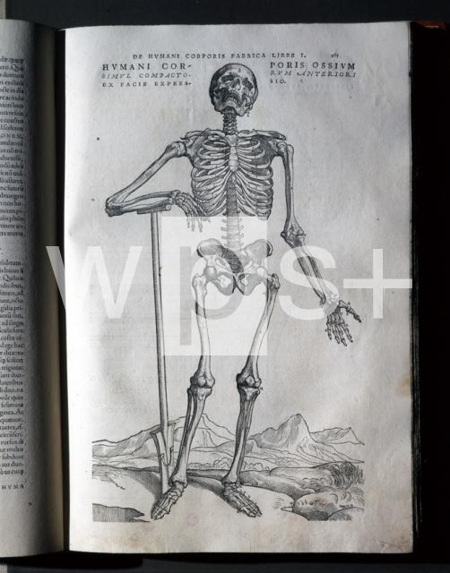 CALCAR Jan Stephen van|ファブリカ「人体の構造」の挿絵 - 科学 | wps+(ワールド・フォト・サービス)